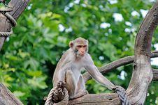 Free Macaque, Fauna, Mammal, Primate Stock Image - 107374801