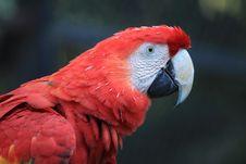 Free Bird, Beak, Red, Parrot Royalty Free Stock Photo - 107374865
