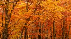 Free Nature, Autumn, Temperate Broadleaf And Mixed Forest, Ecosystem Stock Photo - 107375120