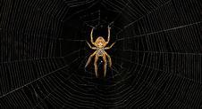 Free Arachnid, Spider, Spider Web, Invertebrate Stock Photos - 107375203