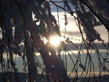Free Branch, Sky, Tree, Light Royalty Free Stock Image - 107375336