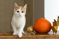Free Cat, Small To Medium Sized Cats, Whiskers, Cat Like Mammal Royalty Free Stock Photos - 107439258
