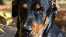 Free Dog, Dog Breed, Dog Like Mammal, Snout Royalty Free Stock Images - 107439499