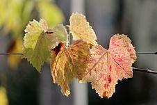 Free Leaf, Autumn, Flora, Branch Stock Photos - 107439513