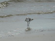 Free Fauna, Bird, Shorebird, Seabird Royalty Free Stock Images - 107439819