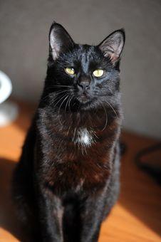 Free Cat, Black Cat, Black, Whiskers Stock Photos - 107439883