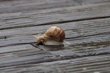 Free Snails And Slugs, Snail, Invertebrate, Molluscs Stock Photos - 107439943