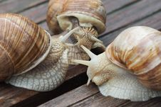 Free Snails And Slugs, Snail, Molluscs, Conchology Stock Photography - 107440082