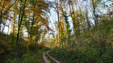 Free Ecosystem, Temperate Broadleaf And Mixed Forest, Path, Nature Reserve Stock Photos - 107440423