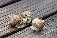 Free Snail, Snails And Slugs, Molluscs, Conchology Stock Image - 107440431