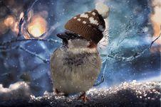 Free Bird, Sky, Beak, Snow Royalty Free Stock Photo - 107451855