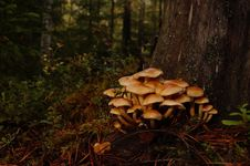 Free Fungus, Ecosystem, Mushroom, Edible Mushroom Royalty Free Stock Images - 107451999