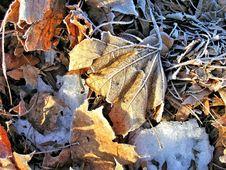 Free Leaf, Frost, Autumn, Deciduous Stock Photo - 107452630