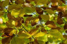 Free Leaf, Deciduous, Vegetation, Autumn Royalty Free Stock Image - 107452736