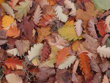 Free Leaf, Autumn, Deciduous, Plant Stock Image - 107453271