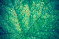 Free Cucumber Leaf In Water Drops Retro Stock Photos - 107647923