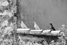 Free Black And White, Monochrome Photography, Bird, Photography Stock Photos - 107750663