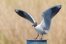 Free Bird, Fauna, Seabird, Beak Royalty Free Stock Photography - 107750827