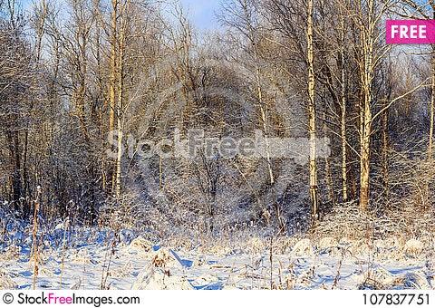 Free Winter Frosty Sunny Landscape Stock Image - 107837751