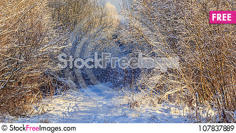 Free Winter Frosty Sunny Landscape Royalty Free Stock Images - 107837889