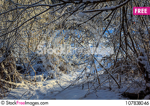 Free Winter Frosty Sunny Landscape Royalty Free Stock Image - 107838046