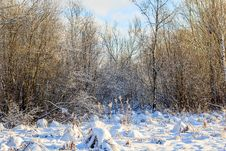 Free Winter Frosty Sunny Landscape Royalty Free Stock Photo - 107837725