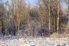 Free Winter Frosty Sunny Landscape Stock Image - 107837751
