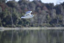 Free Bird, Ecosystem, Seabird, Water Royalty Free Stock Images - 107838019