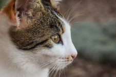Free Cat, Whiskers, Fauna, Small To Medium Sized Cats Royalty Free Stock Image - 107888876