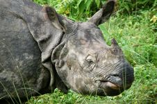 Free Wild Rhino Stock Photography - 10793992