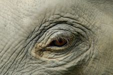 Free Elephant´s Eye Close-up Royalty Free Stock Photos - 10794038