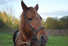 Free Horse, Halter, Bridle, Horse Tack Royalty Free Stock Photos - 107900738