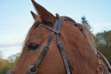 Free Horse, Bridle, Halter, Rein Stock Image - 107900921