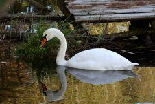 Free Reflection, Water, Swan, Bird Royalty Free Stock Photography - 107901067