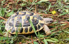 Free Tortoise, Turtle, Emydidae, Terrestrial Animal Royalty Free Stock Photos - 107901228