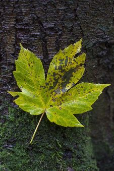 Free Leaf, Plant, Flora, Deciduous Royalty Free Stock Images - 107901639