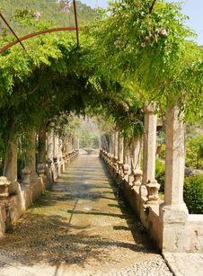 Free Tree, Plant, Flower, Garden Royalty Free Stock Photos - 107901828