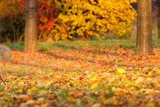 Free Nature, Autumn, Leaf, Deciduous Royalty Free Stock Image - 107902096
