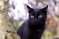 Free Cat, Black Cat, Whiskers, Mammal Stock Images - 107946334