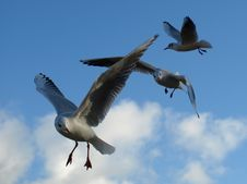 Free Bird, Gull, Sky, Seabird Royalty Free Stock Images - 107946369