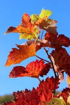 Free Leaf, Autumn, Maple Leaf, Sky Royalty Free Stock Photo - 107946385