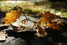 Free Leaf, Autumn, Deciduous, Fungus Royalty Free Stock Image - 107946666
