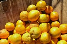 Free Citrus, Fruit, Produce, Valencia Orange Royalty Free Stock Photos - 107950748