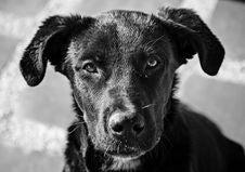 Free Dog, Black, Black And White, Dog Breed Stock Photo - 107950800