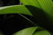 Free Leaf, Plant, Close Up, Banana Leaf Stock Photos - 107950843
