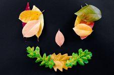 Free Leaf, Petal, Flower, Fruit Stock Images - 107952104