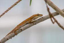 Free Reptile, Fauna, Lizard, Scaled Reptile Stock Photo - 107952980