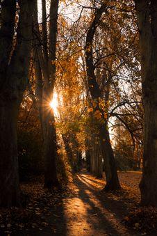 Free Nature, Woodland, Tree, Autumn Royalty Free Stock Photography - 107953197