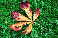 Free Leaf, Plant, Grass, Autumn Stock Image - 107956981