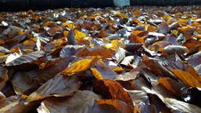 Free Leaf, Water, Autumn, Deciduous Royalty Free Stock Photos - 107958668